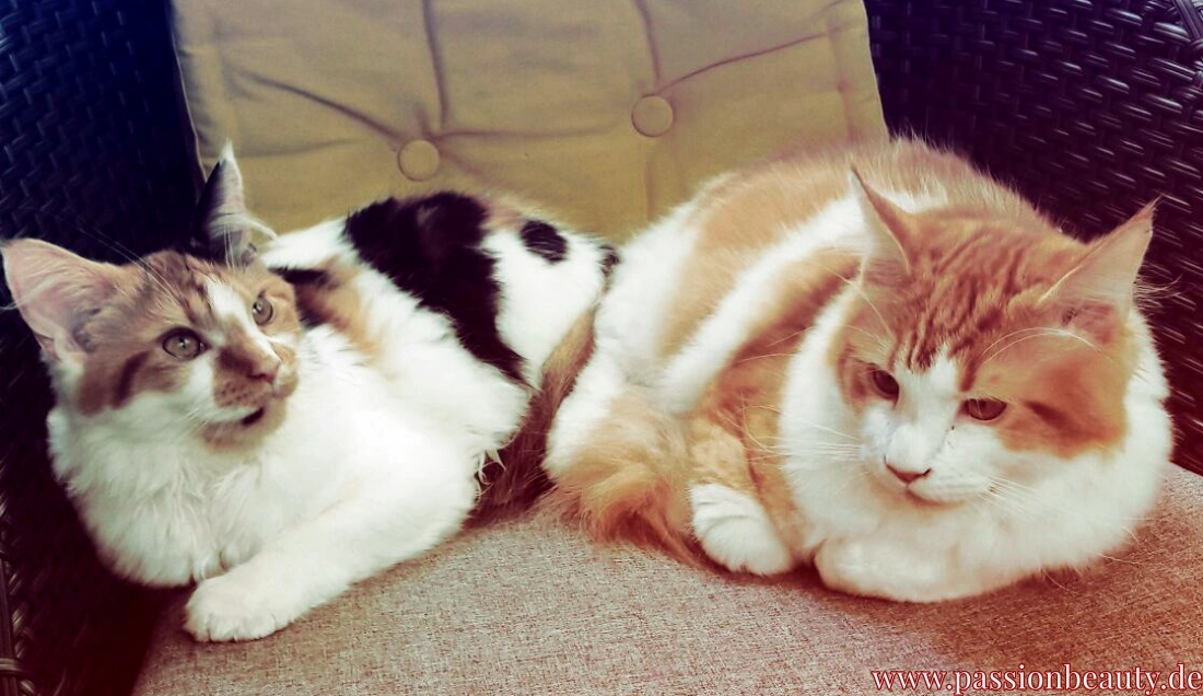 Die Katzen einer Freundin chillen auf dem Balkon. Auch hier kann es Zecken geben!